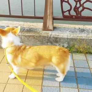 ありすの散歩