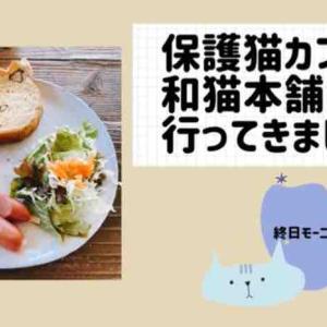 【保護猫カフェ】「和猫本舗」さんに行ってきました【終日モーニングサービス】