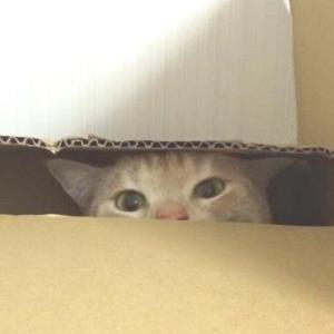 猫のいるテレワークが普通になって1年以上経った