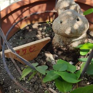 草花の名前は忘れない!植物ネームプレートDIY