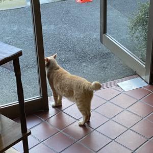 【day25】奥多摩と番猫と素晴らしき鉢の木【アフリカ出国まで残り5ヶ月を綴るブログ!】
