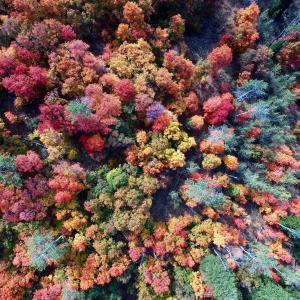 【オグデン谷】紅葉が美しい!(アメリカ・ユタ州)