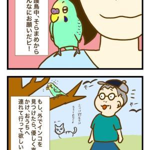 外でインコをみつけたら 保護鳥さんからのお願い