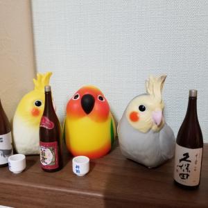 日本酒フィギアとオカメインコバナちゃん