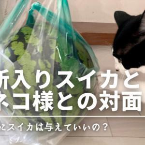 【夏の食べ物】スイカとネコ様との対面!猫にスイカはあまりおすすめしないわけ
