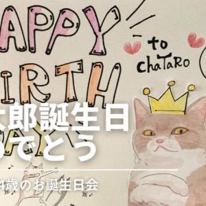 【ネコ様】茶太郎誕生日おめでとう!