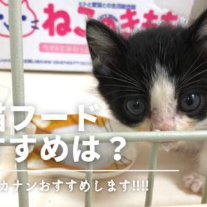 子猫用フードを買うならこれ!ロイヤルカナンのおすすめポイント5選!
