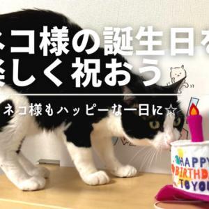 ネコ様の誕生日の祝い方
