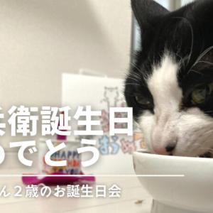 【ネコ様】八兵衛誕生日おめでとう!
