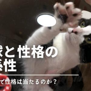 【実証】猫の肉球と性格の関係性を調べてみた!