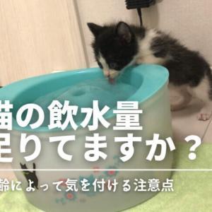 【シニア猫は要注意】猫の飲水量足りてますか?年齢によって気を付ける注意点