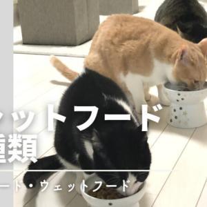 猫を飼い始めた人にわかりやすく説明!キャットフードの種類