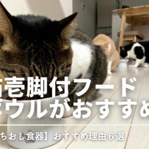 【いちおし猫用食器】猫壱の脚付フードボウルがおすすめな理由6選
