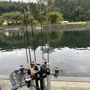 【管理釣り場釣行記録】R3.9.11(放流魚狩りが好調でした)