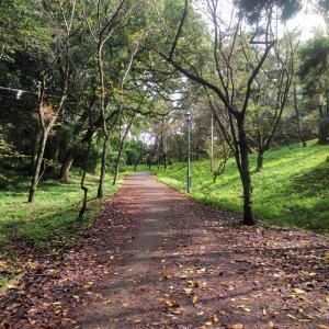 【ハイブリッド散歩】散歩のその先へ