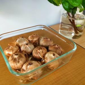【楽しい!美味しい!簡単!】きのこ栽培。サフラン栽培。