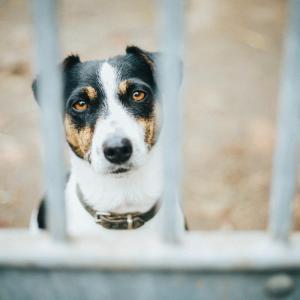 【注意喚起その2】ベトナム / ハノイで起こる犬の盗難事件。愛犬を守るためにできることとは?