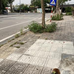 続・ハノイ / ベトナムのコロナ渦での犬の散歩について