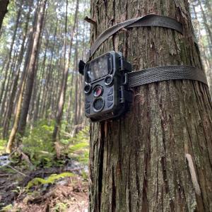 センサーカメラ設置