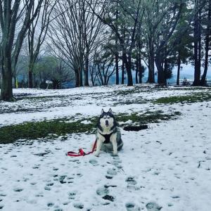 20200330☆上州雪遊び