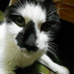 猫の甲状腺機能亢進症と腎不全の関係