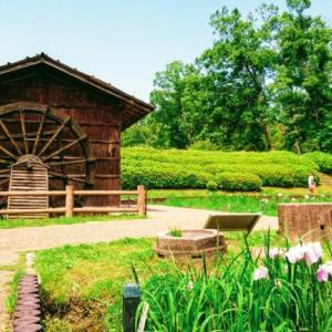 【初夏】大和民族公園を散策!紫陽花や菖蒲が見ごろ!