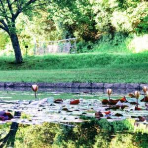 【夏】大和民族公園を散策!睡蓮(スイレン)が見ごろ!