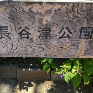 鎌ケ谷市の長谷津公園に行ってきました!