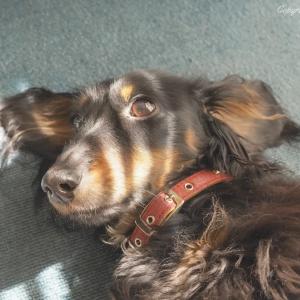 【 黒い犬をかわいく撮る 】ワンコを撮る時に、意識していること