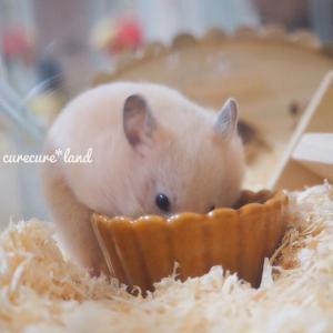 ハムちゃん🐹のお食事🥕 〜主食編〜