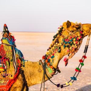 【インド在住がすすめる】インド国内旅行8選【ちょいマニア向け】