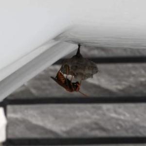 蜂の巣を作らせない方法と実録