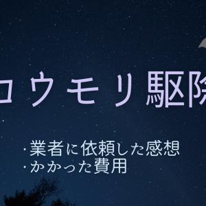 【体験談】コウモリ駆除を業者に依頼してみた感想とかかった費用
