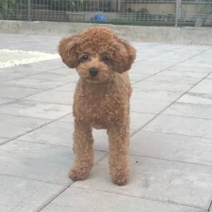 愛犬愛するあまりお庭改造計画【完成】