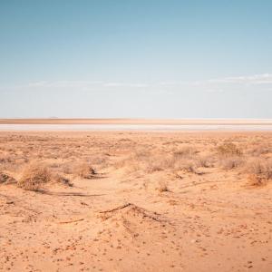 【🐱またたび✈】両方らくだ🐪いましたが?鳥取砂丘とサハラ砂漠で見る砂丘と砂漠の違い