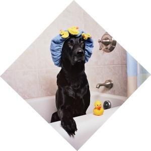 【お家でシャンプー 犬編】頻度、うまく洗えるコツは?獣医師が解説