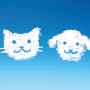 【ペットの熱中症対策】症状は?水分補給の方法は?獣医師が解説します