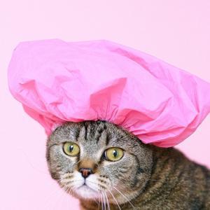 【猫のお手入れ】シャンプーは必要?獣医師が解説します