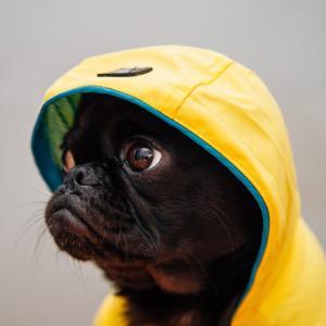 【梅雨時注意!】犬のてんかん発作とは・・獣医師が解説します