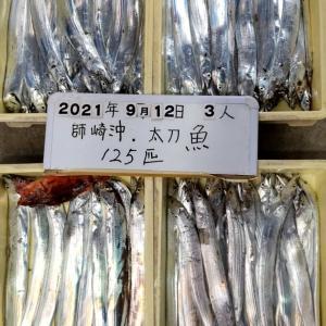 師崎前 タチウオ釣り 相変わらず好調キープ サイズもUP