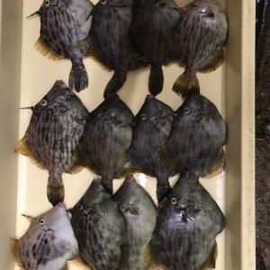 三河湾 船カワハギ 良型混ざりで納得の釣果