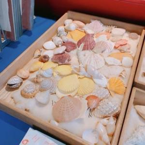 【withコロナ】植物園のバサーの戦利品、貝殻を買いました。