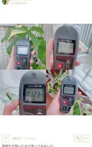 観葉植物に必要な光の量を測ってみました。