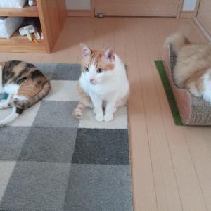 今朝の猫達
