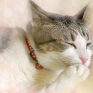 やがて来る、猫の死についての思い