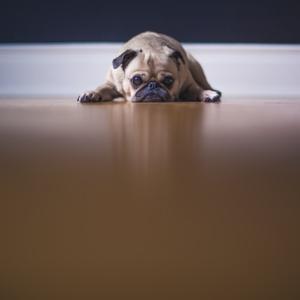 要注意!よかれと思ってあげたレバーで、犬が下痢に。適量や調理は?