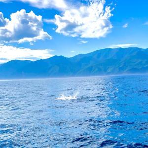 函館 マグロ釣り 一日目