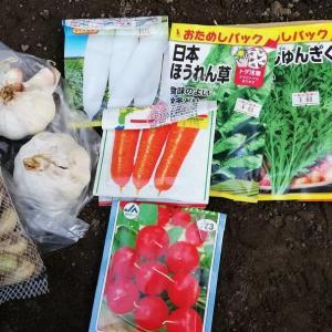 秋冬野菜の種まき、家庭菜園おすすめ野菜。