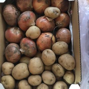 【自分チャレンジ】ジャガイモ使って何種類のおかずが作れるのか?PART2