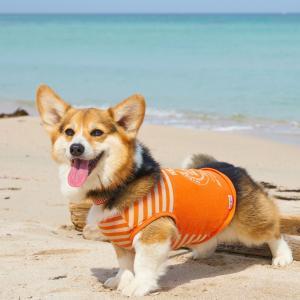 コーギーの子犬の甘噛み対策にはロープを使おう!甘噛みに対する飼い主のメンタルの持ち方も解説!